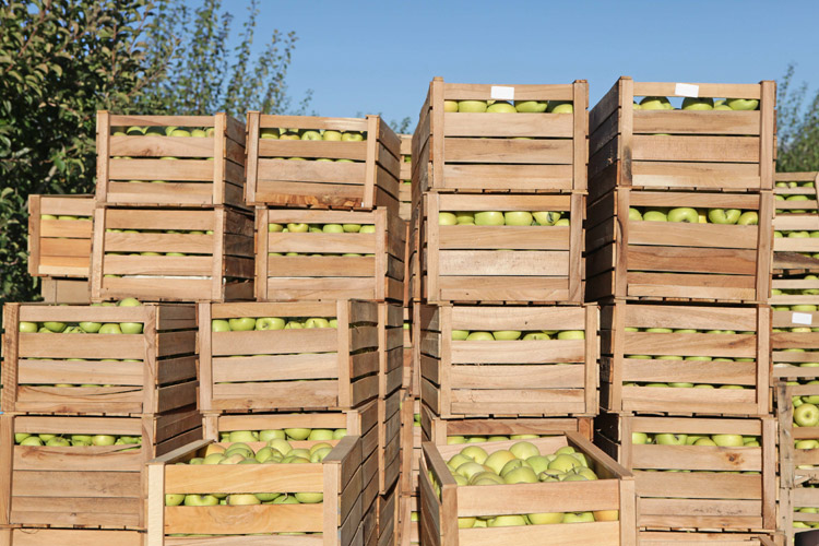 Apple Crates