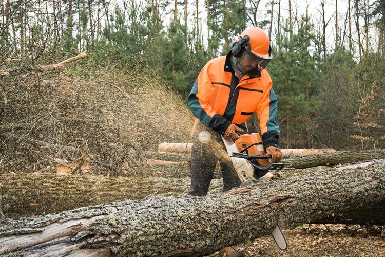 Estate Wood Cutting