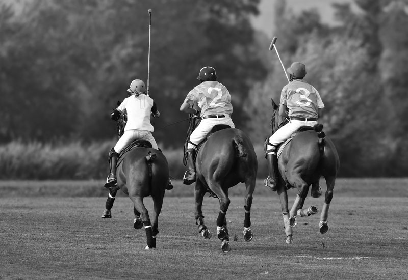 Game of Polo - Horses and Riders